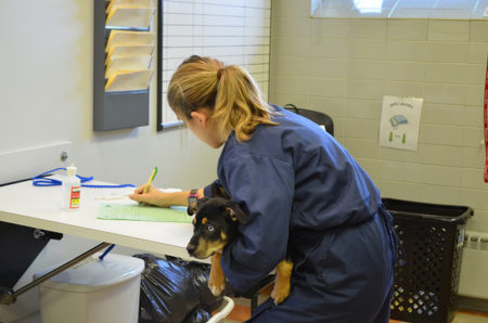 Manor College is the premiere school for veterinary technicians. Students work with large and small animals in labs as they study to earn their associate degree to become a veterinary technician.