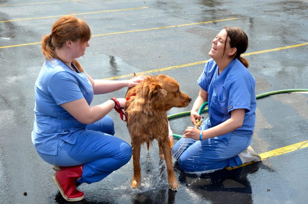 Manor College vet tech school students wash off dog