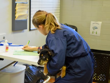 what our associates degree in veterinary technology offers students