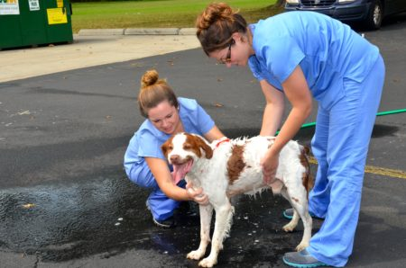 dog wash at manor college