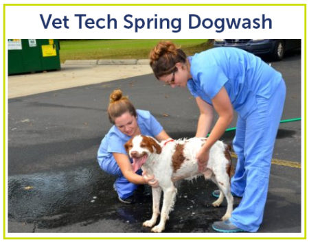 vet tech dog wash